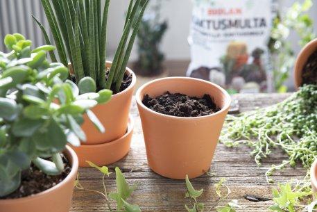 Biolan Kaktusemuld