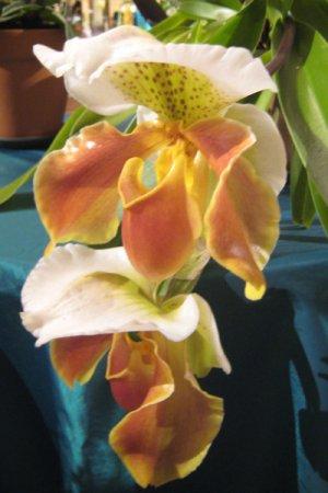 Biolan Orhideeväetis RAIN MIX